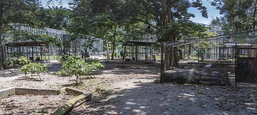 Kinshasa – Jardin Zoologique