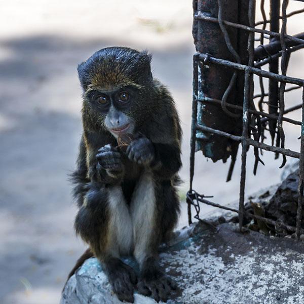 kinshasa, jardin zoologique, dierentuin